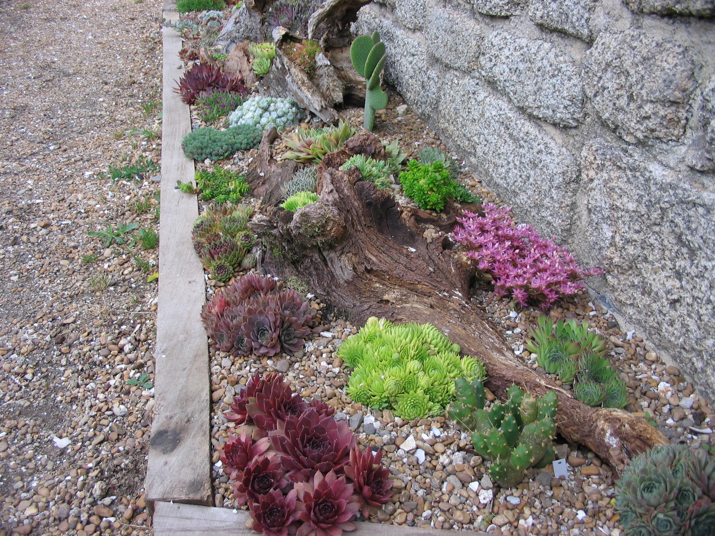 Producteur de plantes vivaces de rocaille et graminees dans le ...