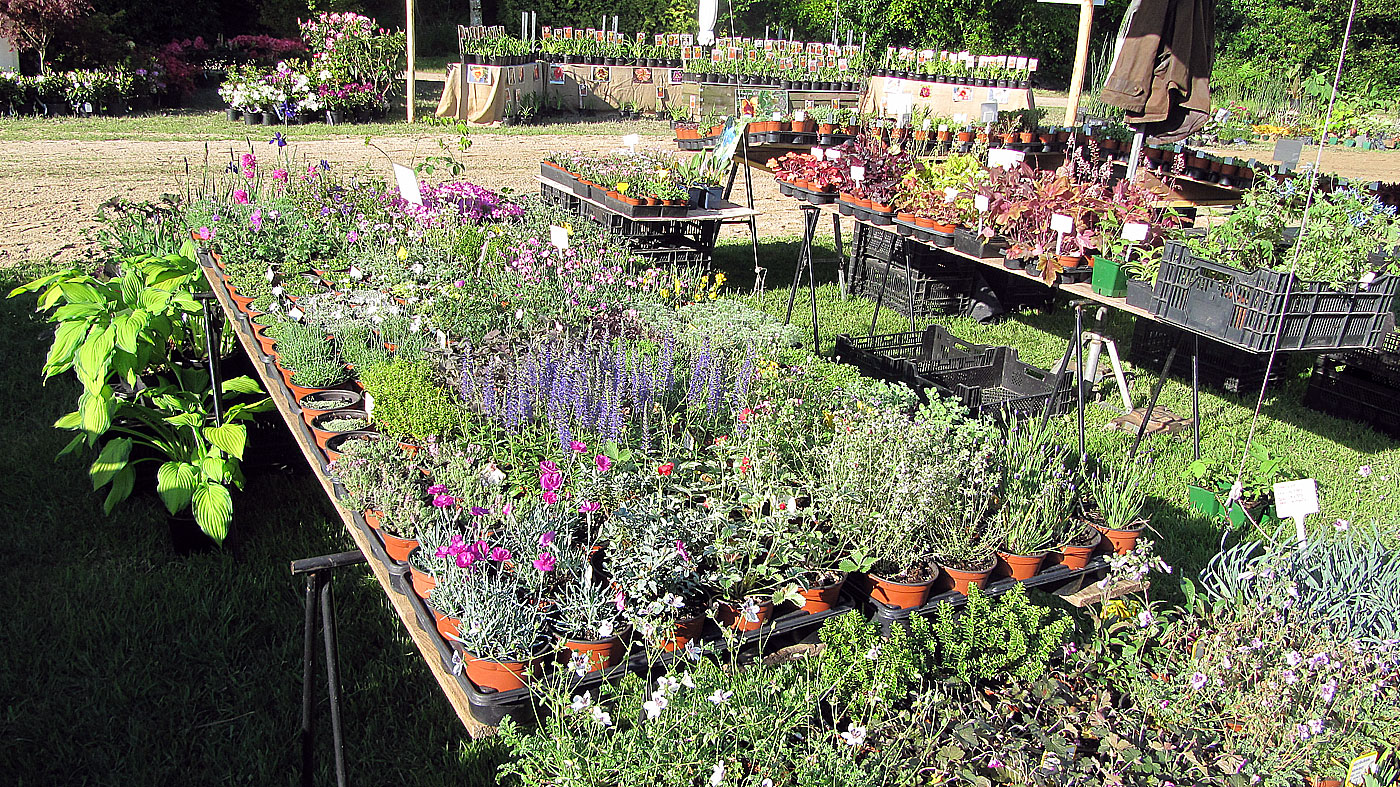 vente et exposition de plante de rocaille gramin es et